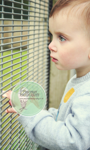 Child looking through zoo railings at animals with facination